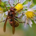 hornets-150x150